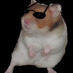 Goldhamster mit Brille